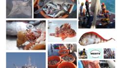 SIH Ifremer. Fiches pratiques d'aide à l'identification des espèces marines de Méditerranée occidentale pour la campagne de chalutage MEDITS