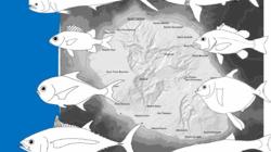 SIH Ifremer. Manuel d'aide à l'identification des principales espèces marines pêchées à La Réunion.
